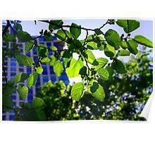 Light Green-Bloor Yorkville Ontario Poster