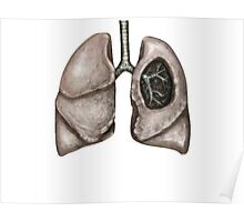 Anatomical lungs Poster