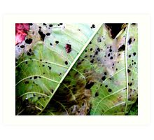 Colours of decay Art Print