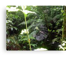 Green Orb Web Spider Canvas Print