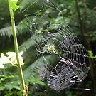 Green Orb Web Spider by jezkemp