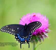 Butterfly on Thistle by Audrey Woods