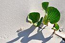 Treasure Island ..... Bribie Island by Barbara Burkhardt