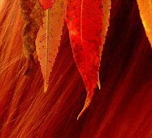 Crimson Summer by lilynoelle