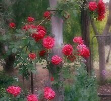 Red Rose Dream by Elaine Teague