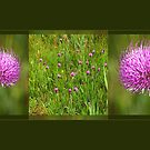 Meadow Thistle - triptych by steppeland