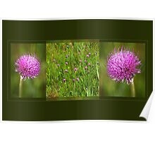 Meadow Thistle - triptych Poster
