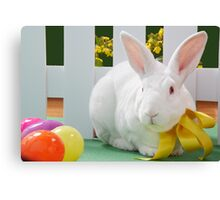 Albino Bunny Rabbit Canvas Print