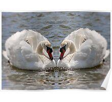 Twin Swans in Gemini Poster