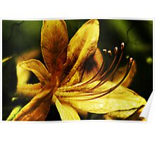 Yellow Flower Closeup Poster