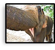 Smiling Elephant, Thailand Canvas Print