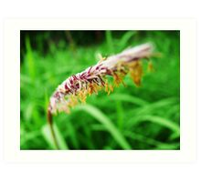 The Flower of Green grass  - Simple beauty among green movement Art Print
