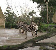 Inner Zebra by Paul Coia