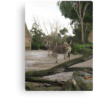 Inner Zebra Canvas Print