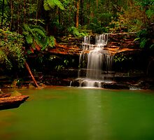 Blue Mountains, New South Wales. by Andy Newman