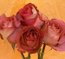 Four Roses by Mia Rose