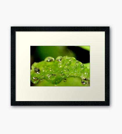 Lime Pop Framed Print