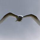 flying through by john  Lenagan