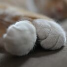 Paws by DarylE