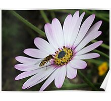 Bee collecting pollen from flower 2 Poster