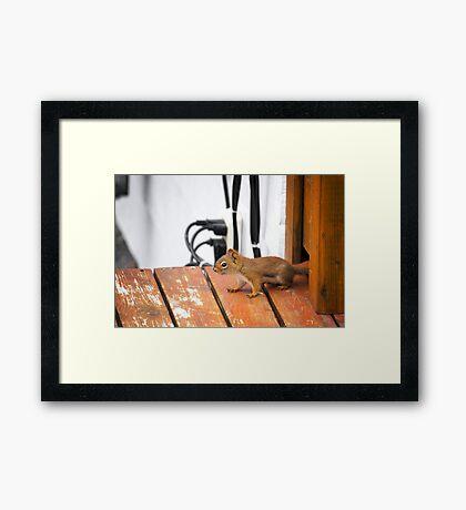 Squirrel!!!! Framed Print