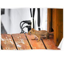 Squirrel!!!! Poster