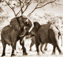 fighting male African Elephants by travel4pictures