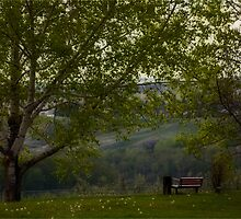A Place to Sit and Ponder by Robin Webster