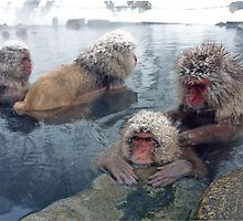 Japanese hot springs, Yutanaka  Jigokudani  onsen, Japan by yoshiaki nagashima