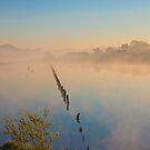 Misty Morn by Gormaymax