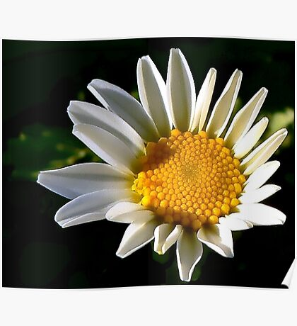 May a Daisy Brighten Your World Poster