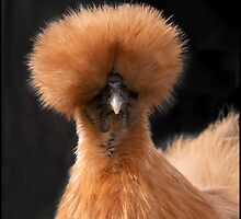 Fine feathers make fine birds by almaalice