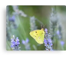 Simply nature, simply beautiful Canvas Print