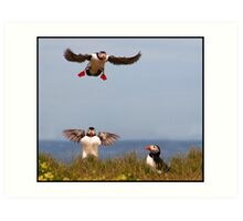 Puffin airways Art Print