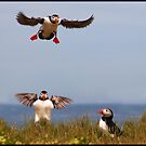 Puffin airways by almaalice