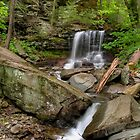 Kitchen Creek At B. Reynolds Falls In Ricketts Glen by Gene Walls