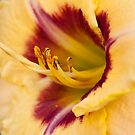 The next Daylily by Ray Clarke