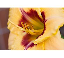 The next Daylily Photographic Print