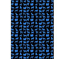 Blue Pet Dog Photographic Print