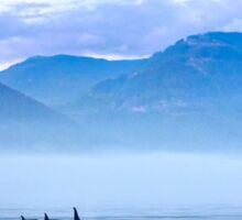 Three Killer whales in mountain landscape  Sticker