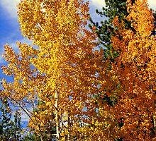 """Autumn Colors"" by Lynn Bawden"