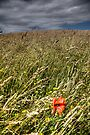 Lone Poppy by Paul Thompson Photography