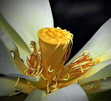 Lotus by Savannah Gibbs