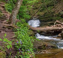 Ganoga Glen Trail Past The Falls by Gene Walls