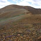 The Flowery Bank of Mount Bross, CO 2010 by J.D. Grubb