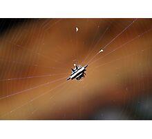Horny Spider Photographic Print