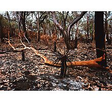 After the fire. Photographic Print