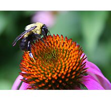 Bee-ing Happy Photographic Print