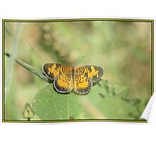 Perfect Pearl Crescent Poster