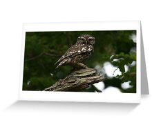 The Little Owl - None Captive Greeting Card